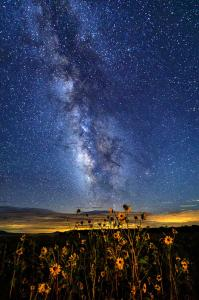 Milky Way Dasies